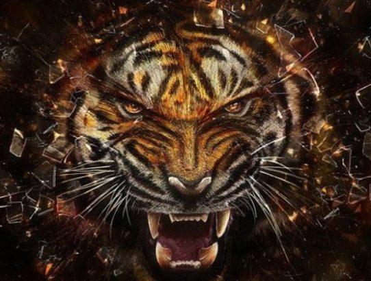 tigrova glava tatu+dodal bi v glavo jin-jang