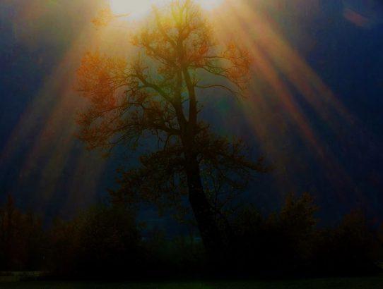 drevo kristi
