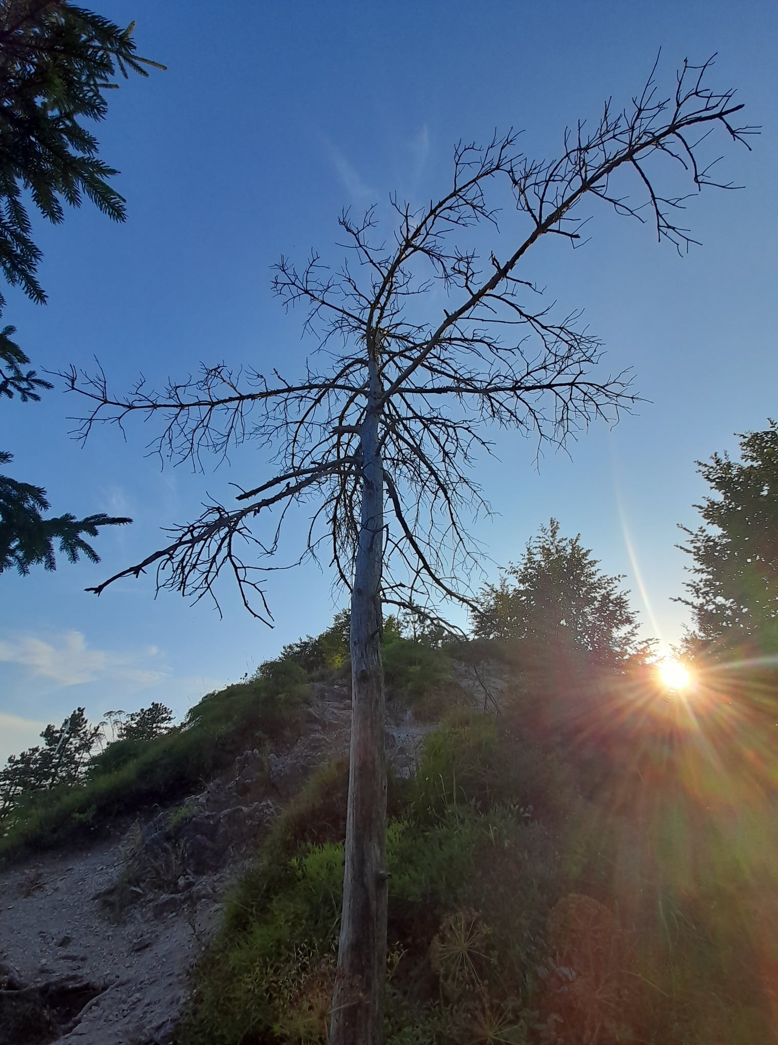 drvo i sunce